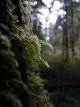w lesie